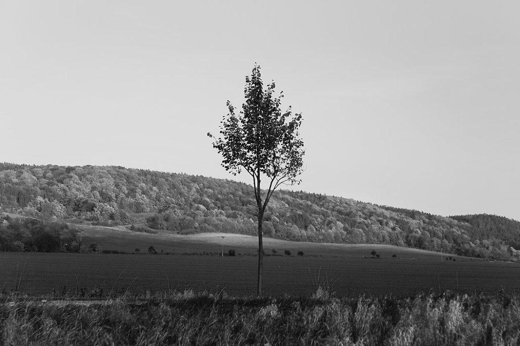 Baum-sw.jpg